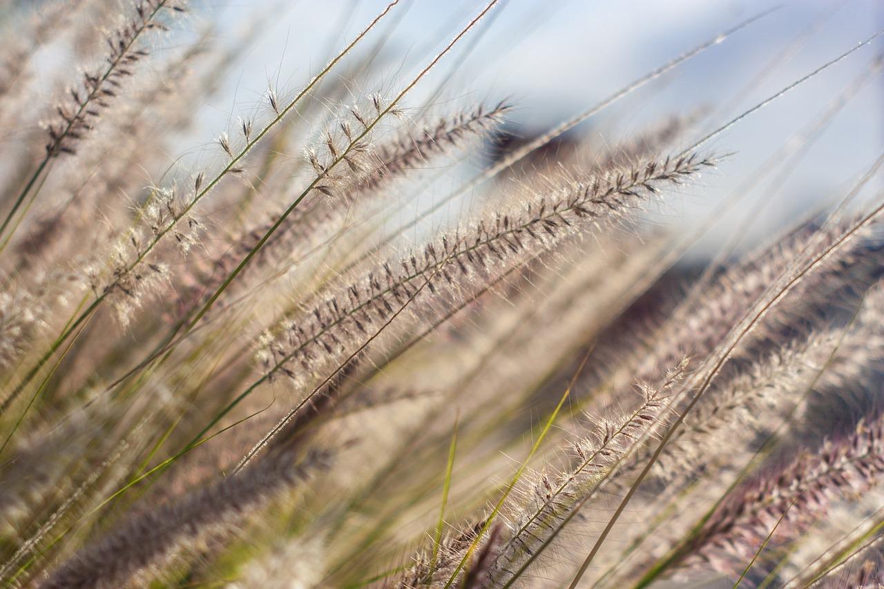 © pixabay.com - Unsplash