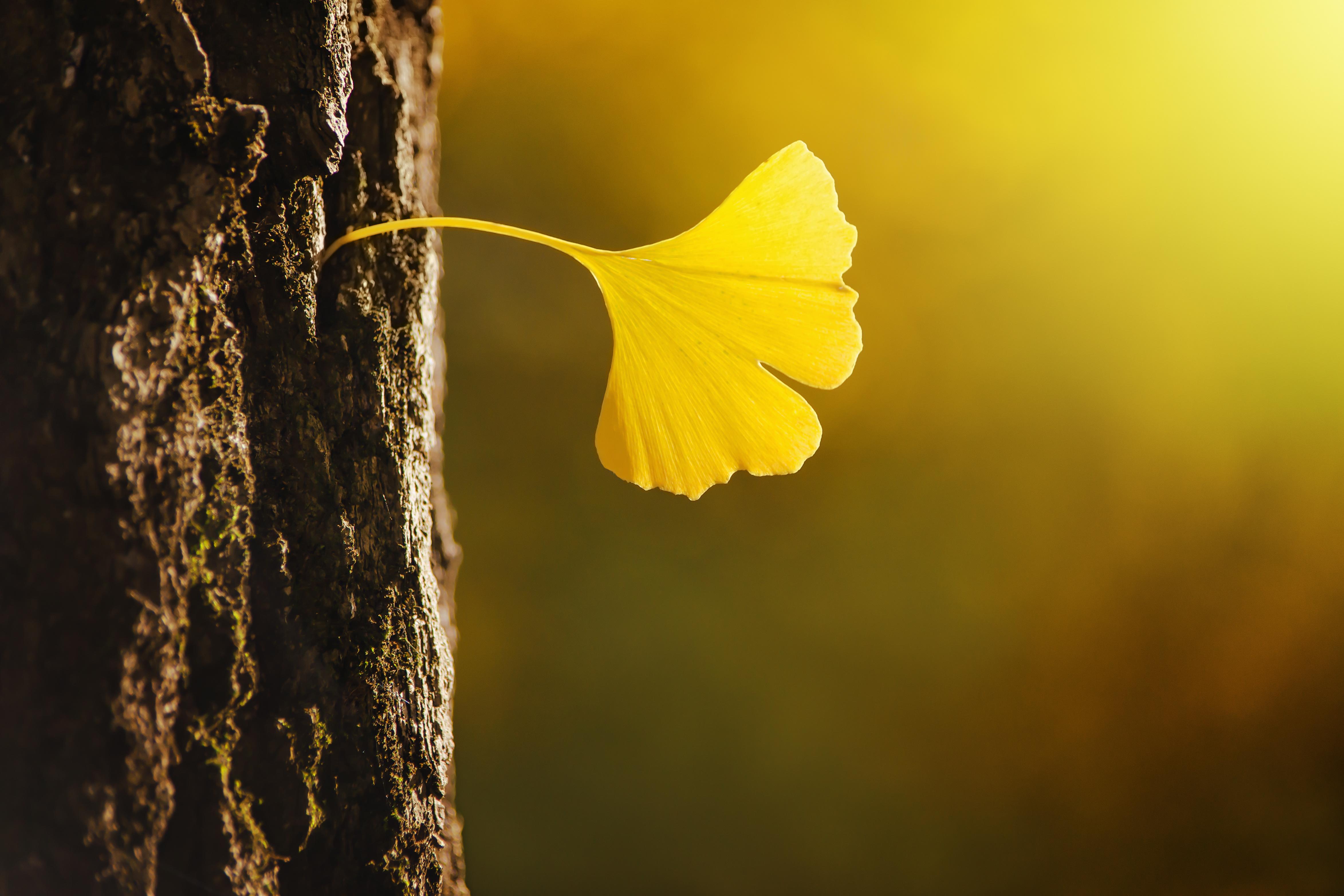 © batke82as - Fotolia.com