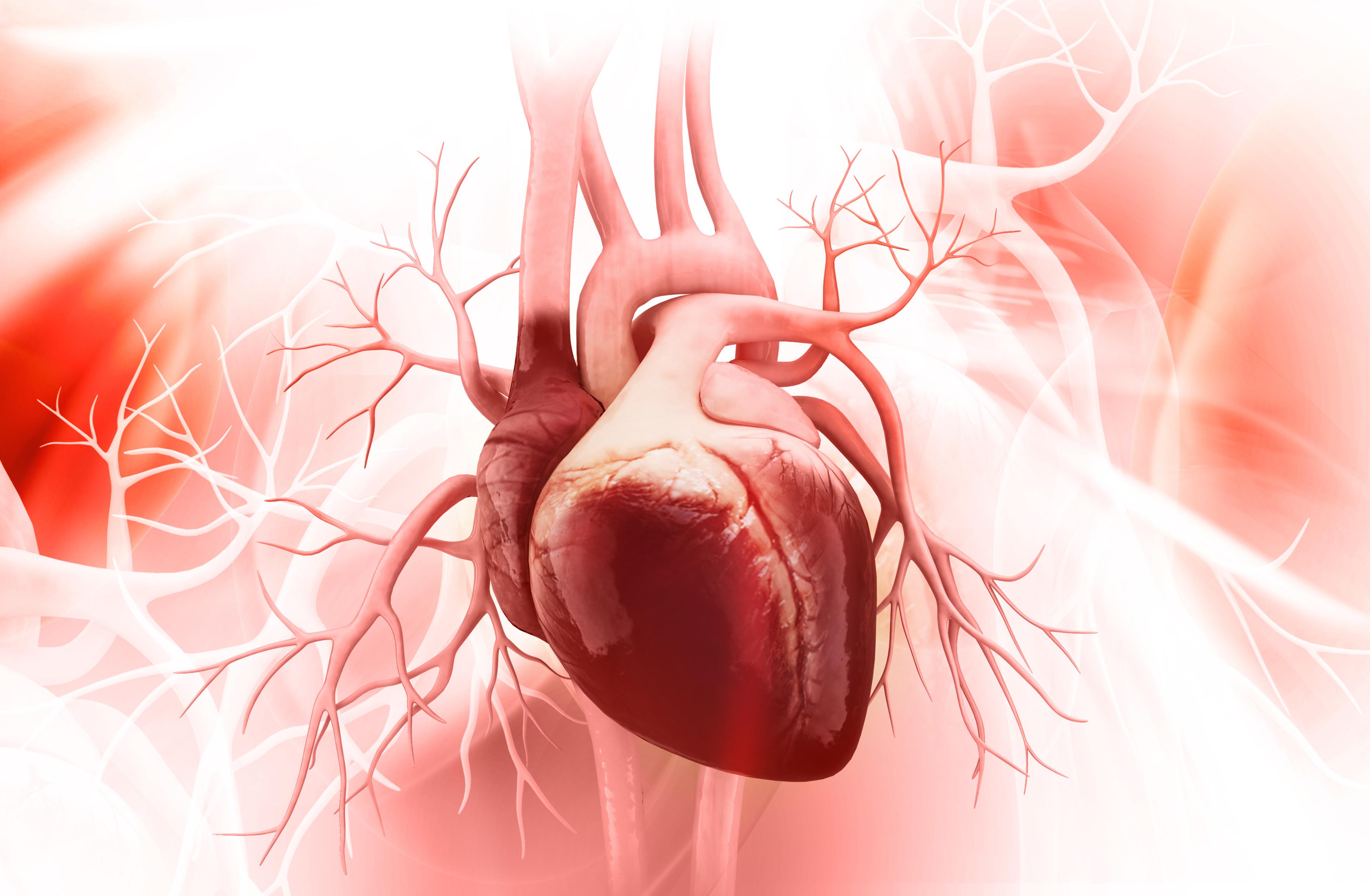 Herzfehler: Löcher in der Scheidewand oder unterentwickelte Herzhälften